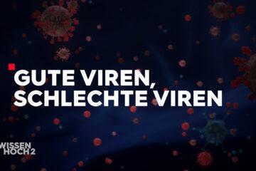 Good viruses, bad viruses